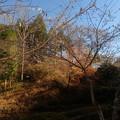 小原村にて (5)