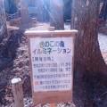 Photos: キノコの森イルミネーション(東栄町) (1)