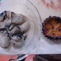 Photos: 酢牡蛎とガンガゼ