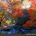 Photos: 八重滝の紅葉を逆光で