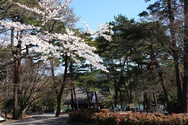 Photos: 再度山