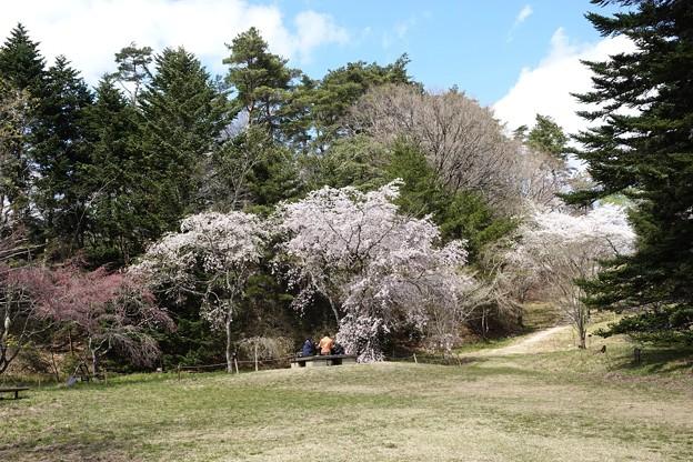 森林植物園4月