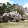 Photos: 森林植物園4月