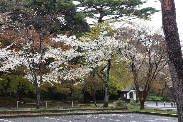 Photos: 雨の再度山