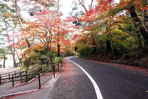 Photos: 11月の修法ヶ原