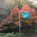 11月の修法ヶ原