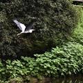 写真: 飛ぶA