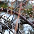 写真: No5の小鳥は初撮りです