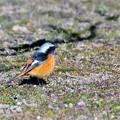 写真: N05の小鳥