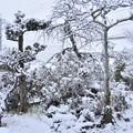 Photos: 今年初めての雪