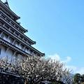 写真: 梅と城