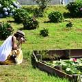 写真: 睡蓮を撮る