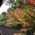 写真: 雲仙国民休暇村
