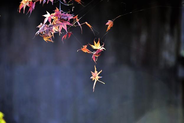 蜘蛛の糸に