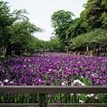 Photos: 大村公園