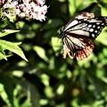 マーク蝶の飛翔
