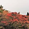 Photos: 仁田峠から下りて