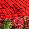 Photos: 紅葉傘