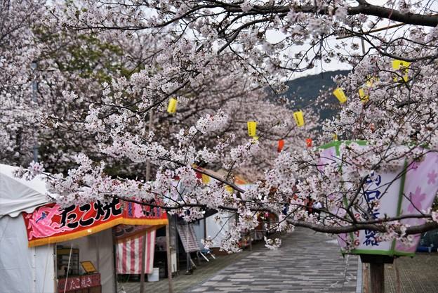 Photos: 花曇りの日