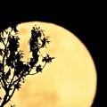 Photos: 昨夜の月
