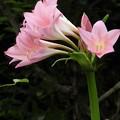Photos: この花は?
