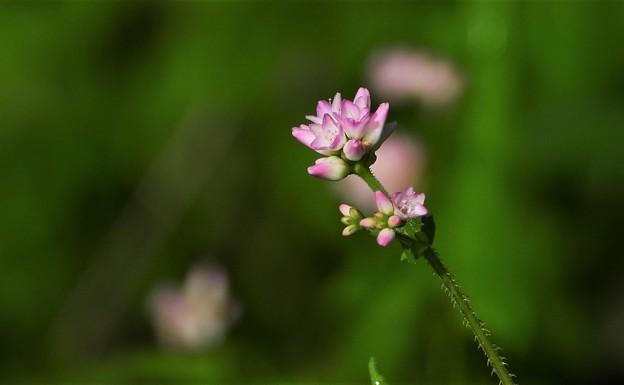 Photos: 路傍の花