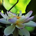 Photos: お盆の花