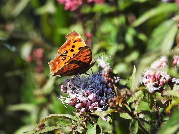 Photos: 蝶を待つ花