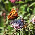 蝶を待つ花
