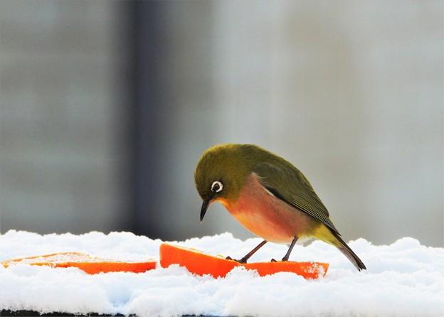 1月10日雪メジロ