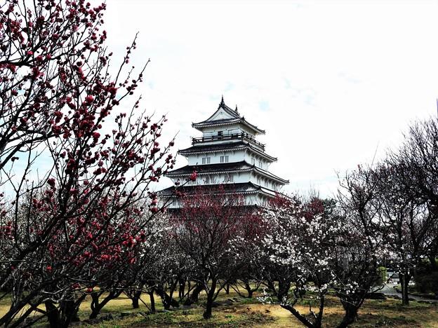 Photos: 梅園と城