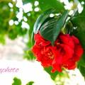 紅の美しさ