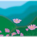ゲレンデに咲くコスモス