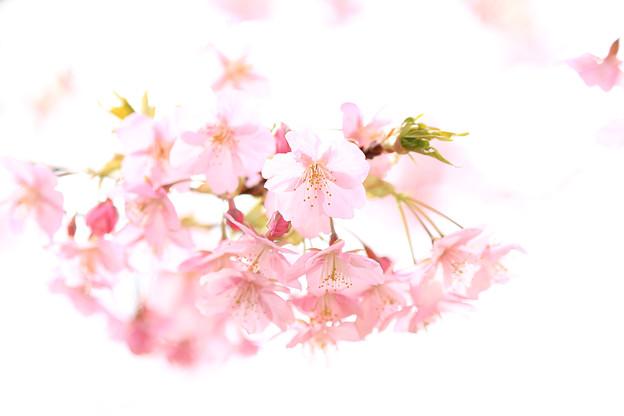 春の日差しの中で