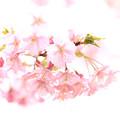 Photos: 春の日差しの中で