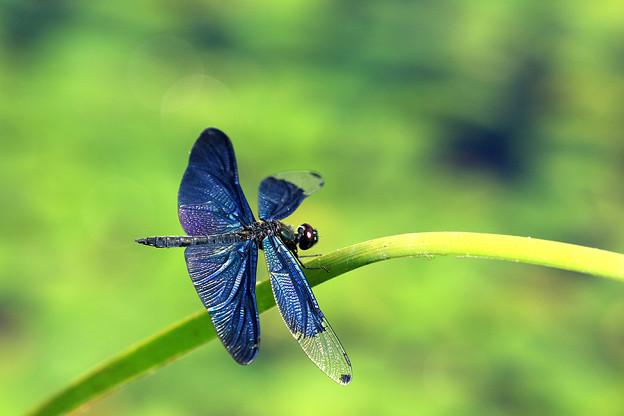 蝶トンボ4