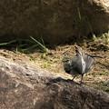 Photos: 小鳥1
