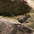 Photos: 小鳥2