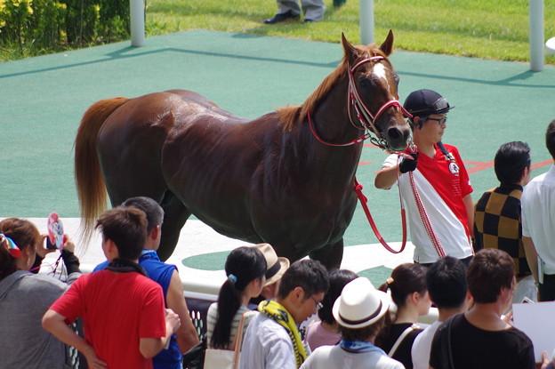 モズアスコット 日本初フランケル産駒牡馬の勝利