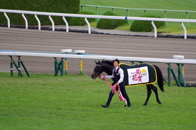 菊花賞馬 ワールドプレミア号