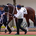 Photos: チュウワノキセキ