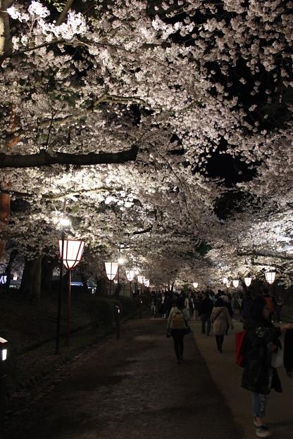 Photos: 夜桜探索