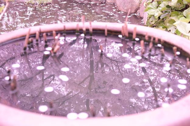 写真: 水に映る