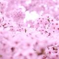 Photos: *ぴょこん*
