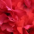 Photos: *紅*