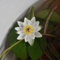Photos: Ezobeni200715-01