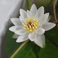 Photos: Ezobeni200715-02