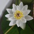 Photos: Ezobeni200715-03