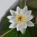 Photos: Ezobeni200715-04