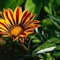 写真: 綺麗な花